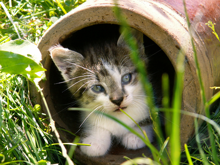 Kitten stock photo,  by Sarka