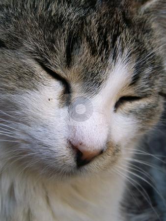 Kitten stock photo,  by Sarka