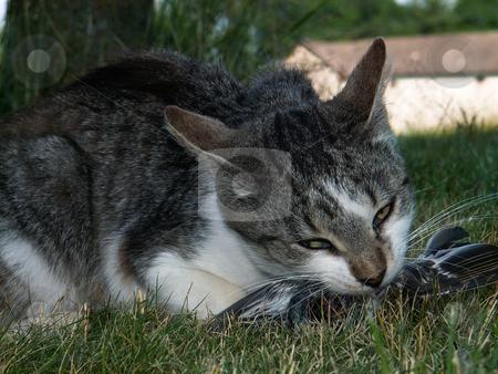 Cat stock photo,  by Sarka