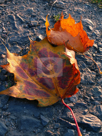 Autumn stock photo,  by Sarka