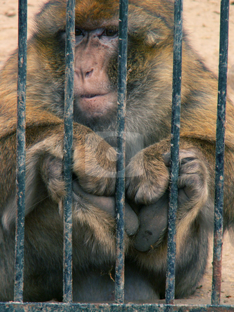 Monkey stock photo,  by Sarka