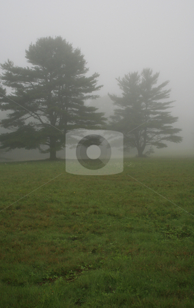 Two Trees in Early Morning Fog stock photo,  by Tom and Beth Pulsipher