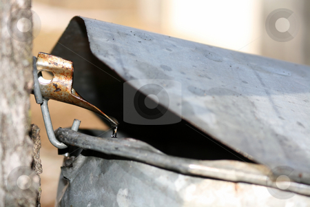 Maple Sugaring - Sap Dripping into Bucket stock photo,  by Tom and Beth Pulsipher