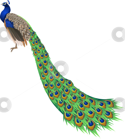 Peacock stock vector clipart, An illustration of a peacock with long tail by Christos Georghiou