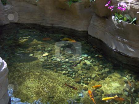 Koi Goldfish Pond stock photo, A nice goldfish pond. by Todd Arena