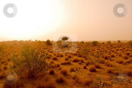 Travelfotografie stock photo, The arid landscape of the Thar desert in the indian state of Rajasthan... by Piero Biondo