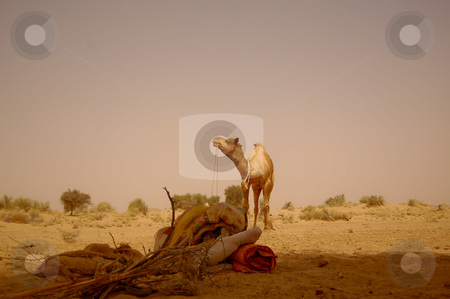 Take a break in the desert stock photo, Captured in the indian state of rajasthan.. by Piero Biondo