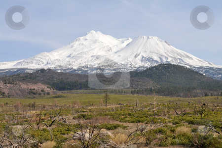 Mt. Shasta stock photo, Mount Shasta covered in snow, near Weed, California by Harris Shiffman