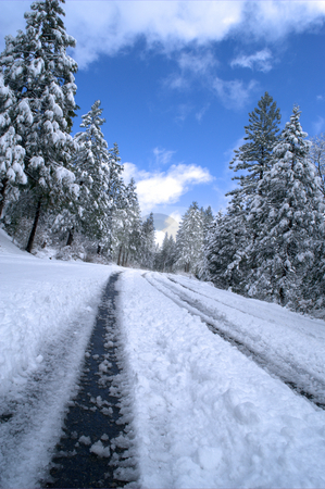 Snowy Mountain Road stock photo, Sierra mountain road lined with trees and covered snow on a clear winter day. by Lynn Bendickson