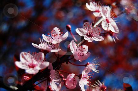 Spring stock photo,  by Simone Tibollo