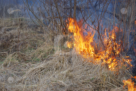 Fire stock photo, Fire is burning dry grass and bushes. by Ivan Paunovic