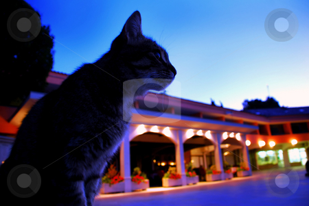 Cat in blue early morning stock photo, Cat sitting on small urban square in blue early morning by Julija Sapic