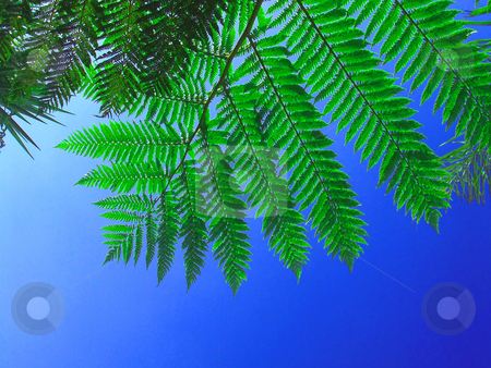 Leafy sky stock photo, Bright green fern leaves against a deep blue sky by Chris Alleaume