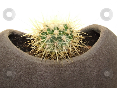 Dwarf cactus stock photo, Dwarf cactus in a clay plant pot by Chris Alleaume