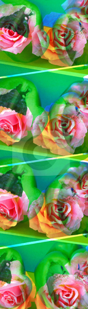 Wood Roses stock photo, Art Image, Small and long Image with pink Roses decorated wth green Peppers unterneasth,1572x5500 Pixel,  24,7 MB, 300 dpi by Ute Wingenfeld