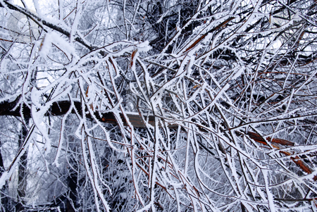 Winter trees background stock photo, Blue winter icy tree branches natural background by Julija Sapic