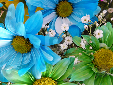 Blue and Green Daisies stock photo, Blue and Green Daisies in a bouquet with baby's breath. (close up) by Dazz Lee Photography