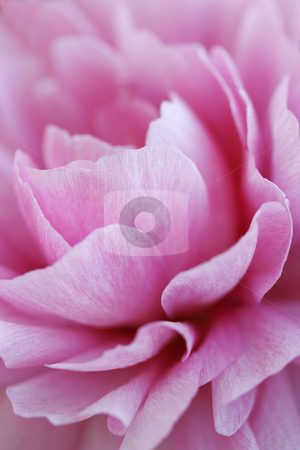 Flower abstract stock photo,  by Liv Friis-Larsen