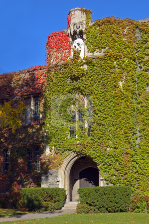 Fall stock photo, Wall of old building, covered by ivy in sunlite by Pavel Cheiko