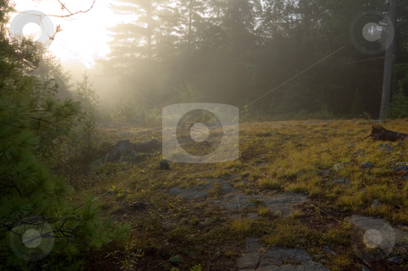 Early morning stock photo, Early morning in forest of Killarney Park by Pavel Cheiko
