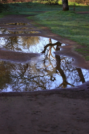 Tree Reflection in Puddle after Rain Storm stock photo, Tree branches reflected in puddle on wet ground after rain storm by Richard Clack