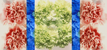 Hong Kong Greetings stock photo, Art Image, Three parted Picture of green and red tipped Carnations with two Stripes with blue Hydrangea,  3304x1560 Pixel, 14,7 MB, 300 dpi by Ute Wingenfeld