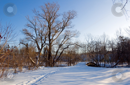 Park stock photo, Sunset in Toronto park in winter time by Pavel Cheiko