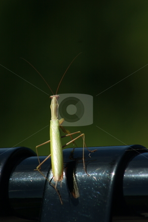 Grass hopper on bench stock photo, A grass hopper sitting on the edge of a black metal bench. by Kevin Woodrow
