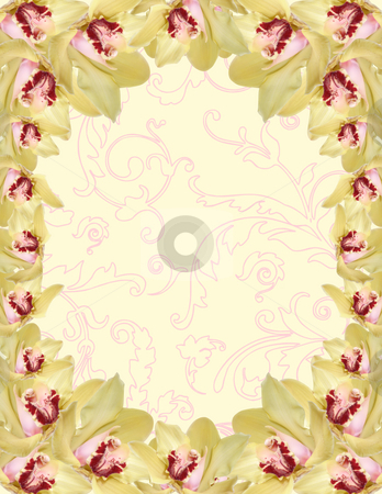 Orchid border stock photo, Orchid flowers border isolated on color background by Desislava Dimitrova