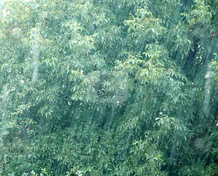 Rainy day stock photo, Rain drops over green walnut tree leaves by Julija Sapic