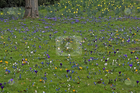 Spring stock photo, Spring field photographed in Frankfurt Main, Hessen, Germany by Manuela Schueler