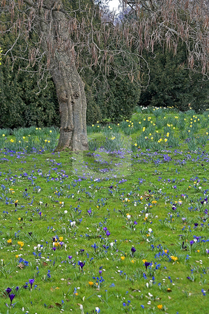 Spring stock photo, Spring field photographed in Frankfurt Main, Hessen, Germany by Manuela Schueler