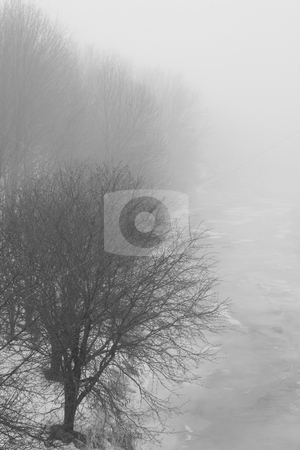 Cold Winter Fog stock photo, A foggy winter scene with trees fading into the fog. by Kevin Woodrow
