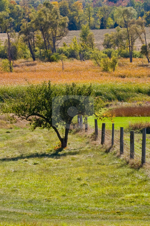 Fence line and fall colors stock photo, Foreground fence and wild green grasses, with fall colors spotting the background. by Kevin Woodrow