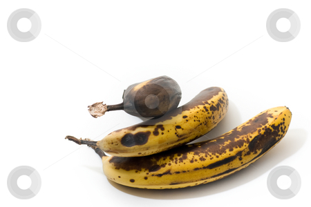 Over-ripenned bananas, isolated stock photo, 3 over-ripenned bananas, isolated on white. by Kevin Woodrow