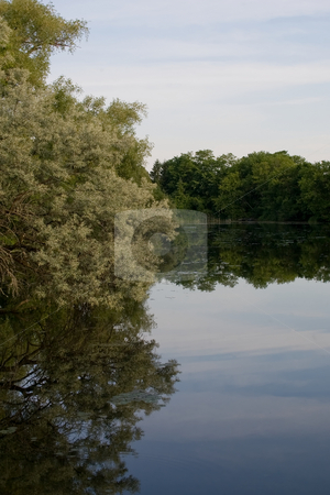 Pond Reflections stock photo, Large tree on the left side overhanging a pond with full reflection of the tree and sky. by Kevin Woodrow