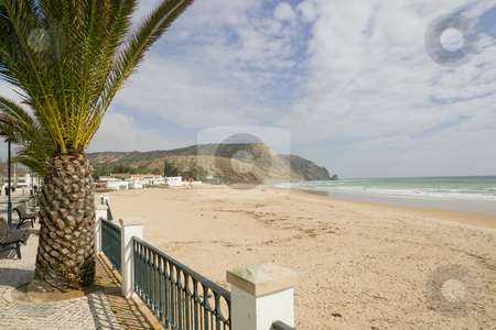 Along the beach in Luz stock photo, A palm tree framing a shot back towards the beach of Luz, Portugal, with the cliffs visibile in the distance. by Kevin Woodrow