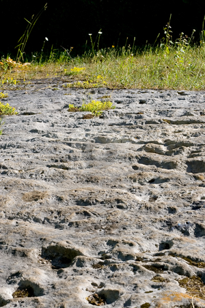 Porous rocky terrain stock photo, Porous rock in the foreground, with tall grasses in the background, fading to black. by Kevin Woodrow