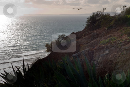 Aloe plant overlooking the ocean stock photo, Foreground Aloe plants on a cliff, overlooking the ocean. by Kevin Woodrow