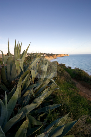 Prickly Aloe stock photo, Wild Prickly Aloe plants in the foreground, looking back towards the coast of Lagos, in the Algarve, Portugal. by Kevin Woodrow