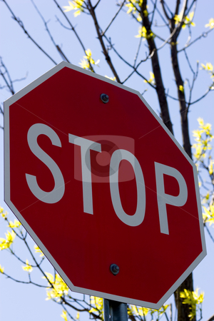Stop Sign stock photo, Stop Sign on a blue sky background with tree branches. by Kevin Woodrow