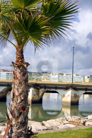 Bridge over calm waters in Lagos Portugal stock photo, A palm tree in the foreground, with a bridge and it's reflection in the background.  Taken in Lagos, Portugal by Kevin Woodrow