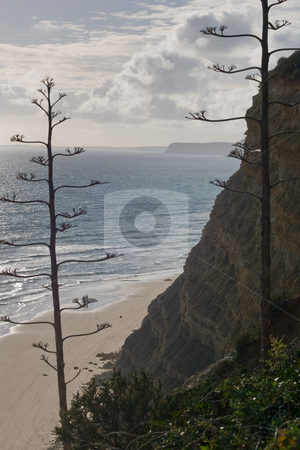 Lonely trees surrounded by cliffs stock photo, Two bare trees with cliffs, sky and the ocean in the background. by Kevin Woodrow