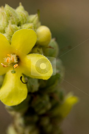 Yellow flower macro stock photo, A close-up of a yellow flower at the end of a stalk. by Kevin Woodrow