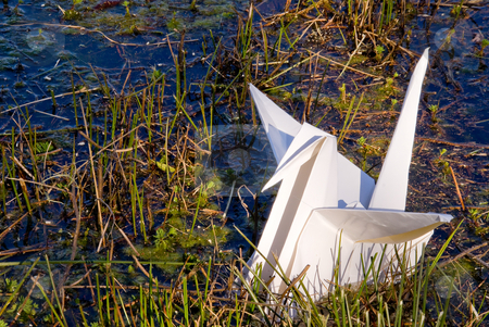 Oragami Crane stock photo, A paper oragami crane in a body of water. by Robert Byron