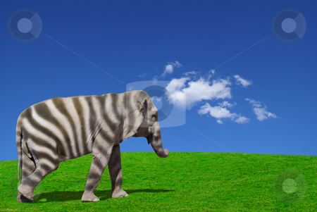A different kind of leader stock photo, A genetically modified Elephant in a different world. by Serge VILLA