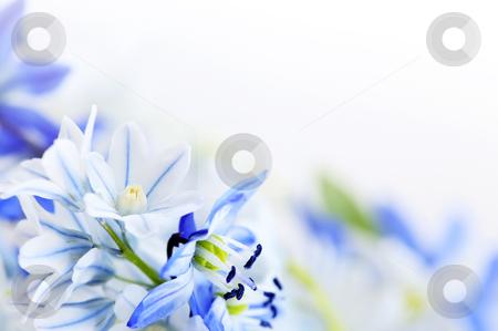 Spring flowers background stock photo, Floral background of first spring flowers close up by Elena Elisseeva