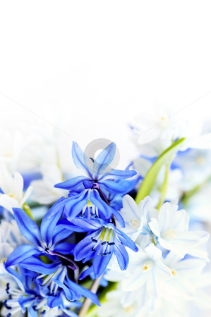 Spring flowers background stock photo, Floral background of first spring flowers close up by Elena Elisseeva