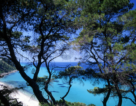 Halkidiki stock photo, Turquoise water and trees of Halkidiki, Greece by Paul Phillips