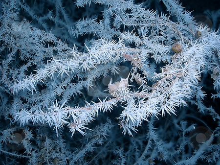 Frozen branch stock photo, Blue branch with ice crystals over black winter background by Julija Sapic